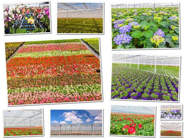 تحميل صور عالية الجودة للزهور