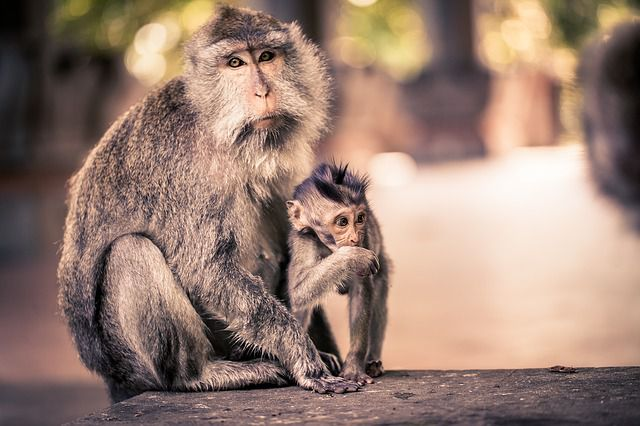Bali Monkey Forest - Most Popular / Famous Bali Attractive Places