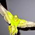 Kusan Kuşlarda Oluşabilecek 10 Belirti