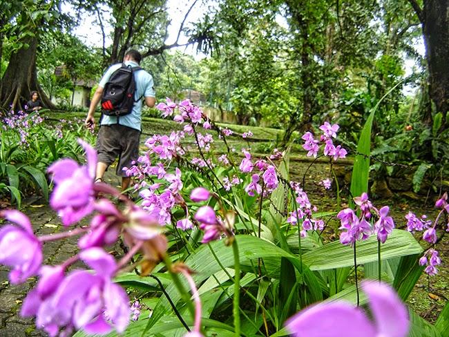 Orquídeas en el jardín botánico de Bogor