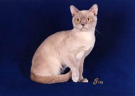 pet shops  Melhores Raças de Gatos para sua Família