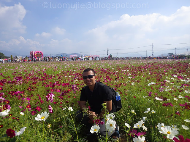 Xinshe Sea of Flowers
