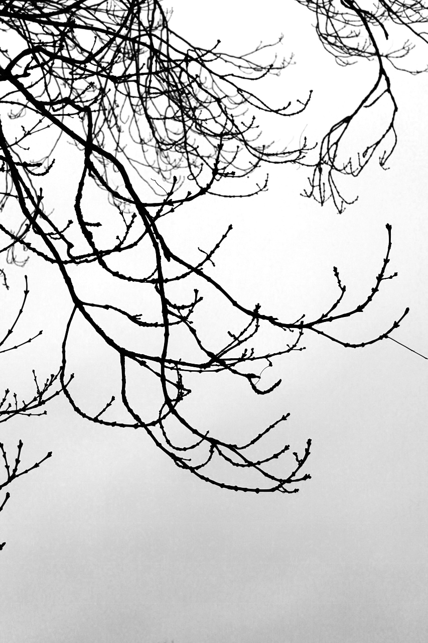 Bare branches of tree in winter