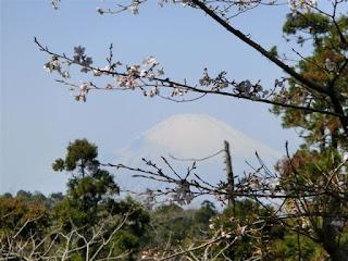 葛原ヶ岡:桜と富士