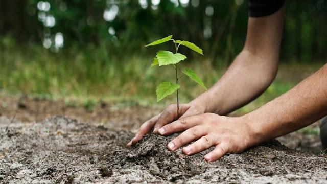 353 δέντρα στη Σουμελά του Βερμίου, για τις 353.000 ψυχές της Ποντιακής Γενοκτονίας