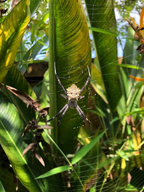 spider bali