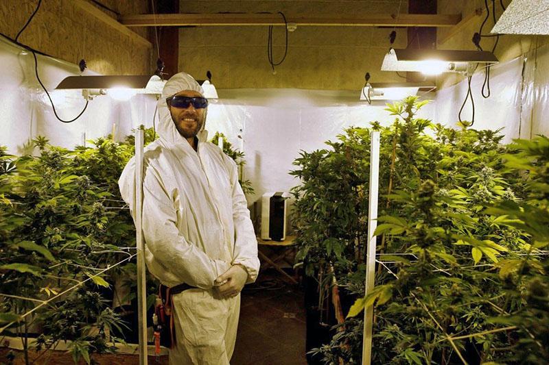 теплица с марихуаной | STARTUP NEWS