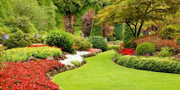 Tips Merancang Taman Rumah Irit Biaya