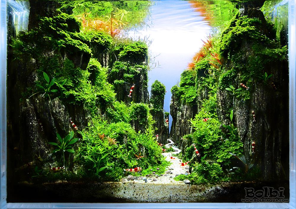 Nano Aquascape Crystal Canyon Setup Guide Aquatic Plant Central