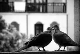 Kata Bijak Cinta Sedih Paling Menyentuh