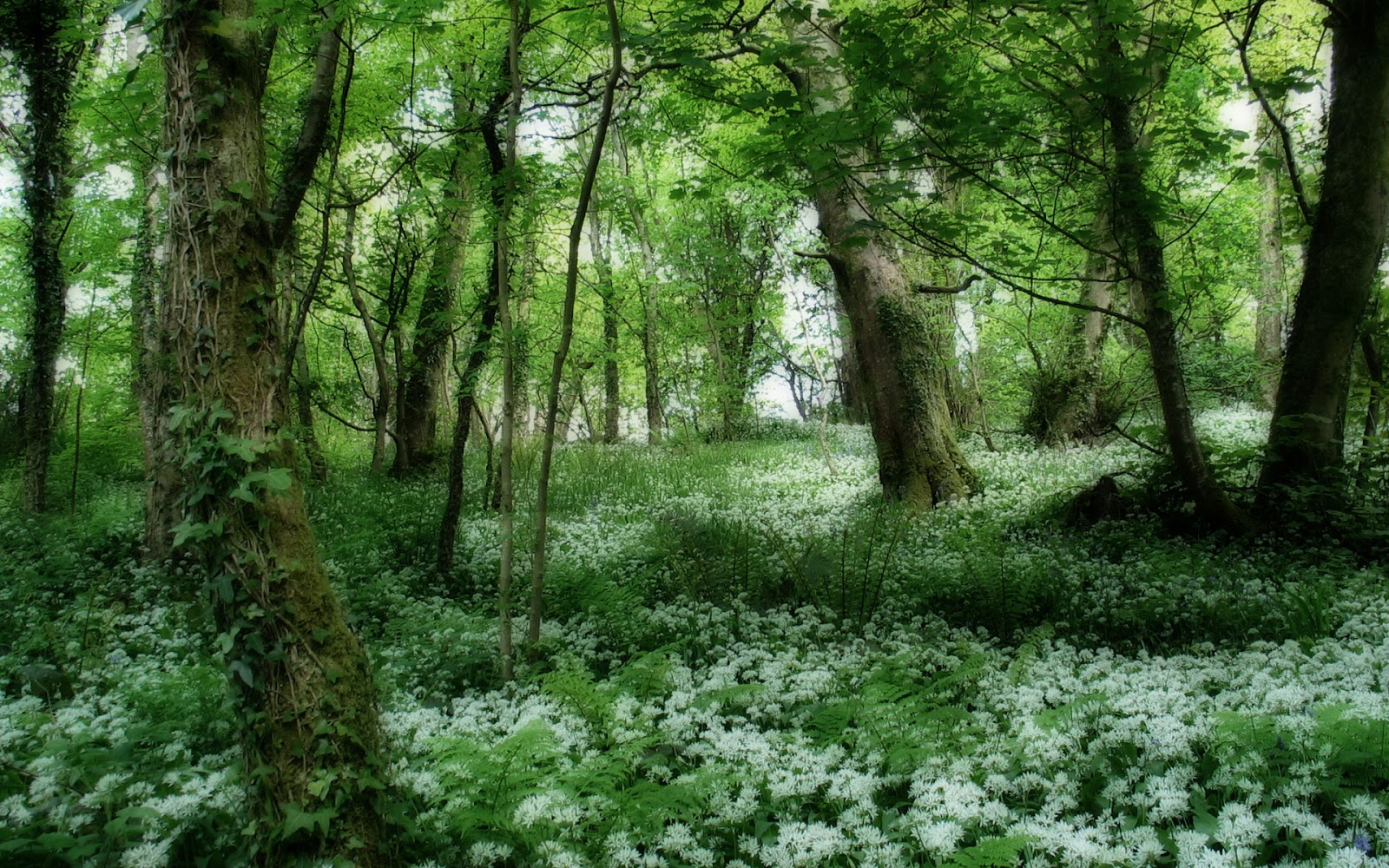 Download Free Forest Wallpapers