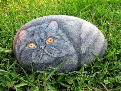Ritratti di animali su sasso gatti samantha abis