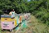 Πόσο μακριά συλλέγουν οι μέλισσες