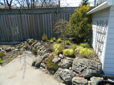 Scarborough rock garden after removing weeping mulberry by garden muses-not another Toronto gardening blog