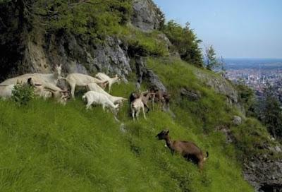 Flora e fauna da Alemanha