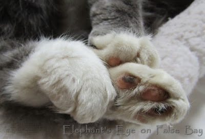 Thomas furry toes overflowing his bed