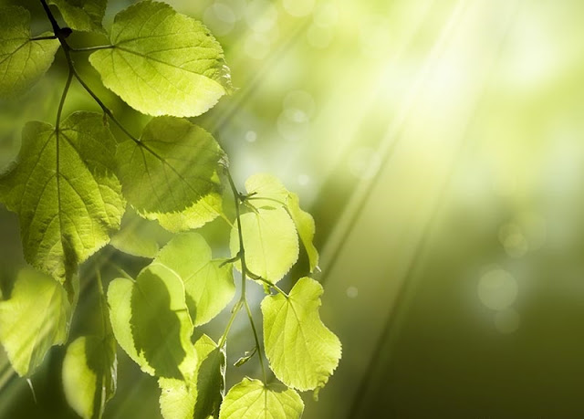 Future increase in plant photosynthesis revealed by seasonal carbon dioxide cycle