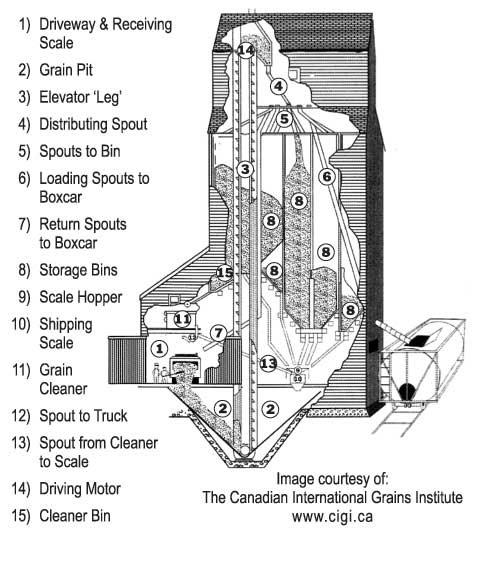 grain kernel diagram ionic bonding lewis dot leg wiring blog anything wheat