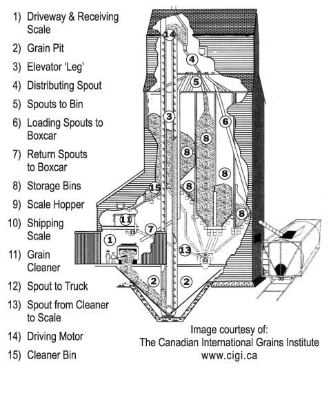 Grain Kernel Diagram Strip Light Wiring Leg Blog Anything Wheat