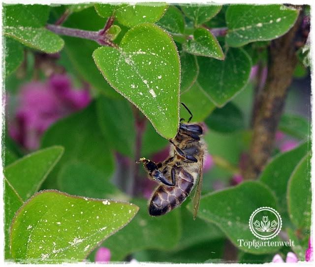 Gartenblog Topfgartenwelt Buchtipp Makrofotografie - die große Fotoschule: Makroobjektiv - Biene
