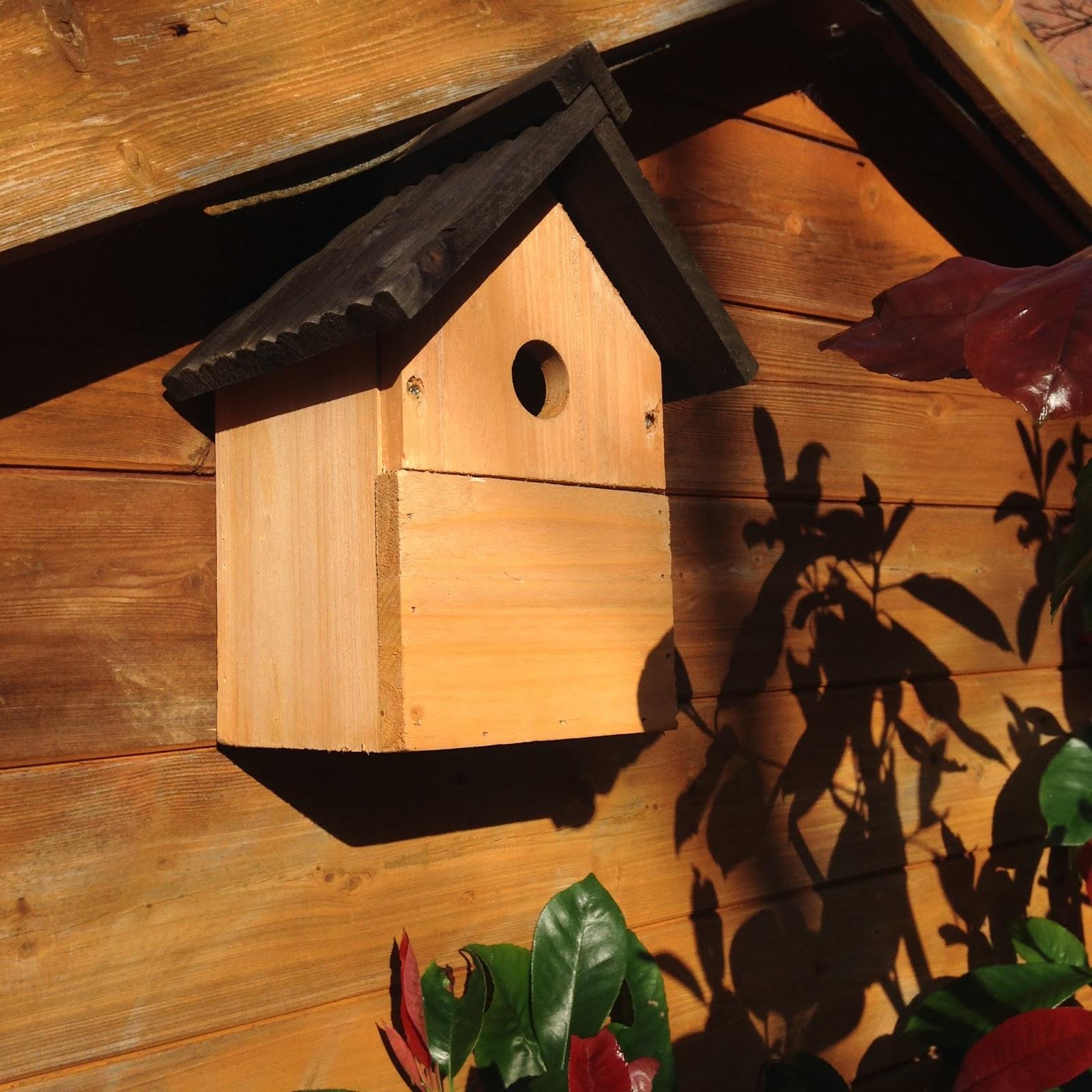 Cómo mantener a las ardillas fuera de alimentadores de aves | Soluciones sencillas - Nueva Inglaterra hoy