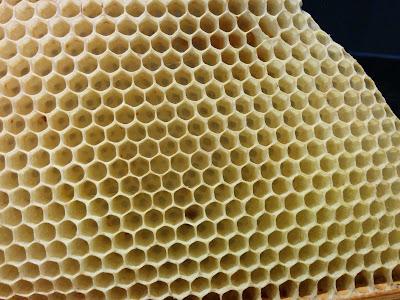 bijenwas bestellen