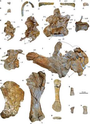معلومات | قصة اكتشاف الديناصور المصري منصوراصورس