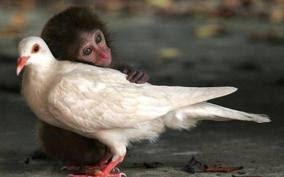 Burung Gereja dan Monyet