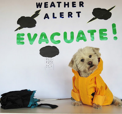 Include Pets in Emergency Preparedness Planning #PetPrepared @HillsPet #sponsored