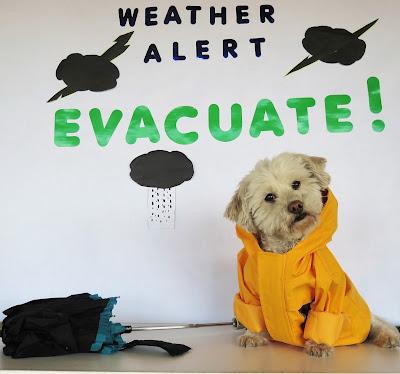 Include Pets in Emergency Preparedness Planning #PetPrepared @HillsPet #sponsored