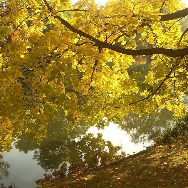 Осень в Калининграде. парк Победы