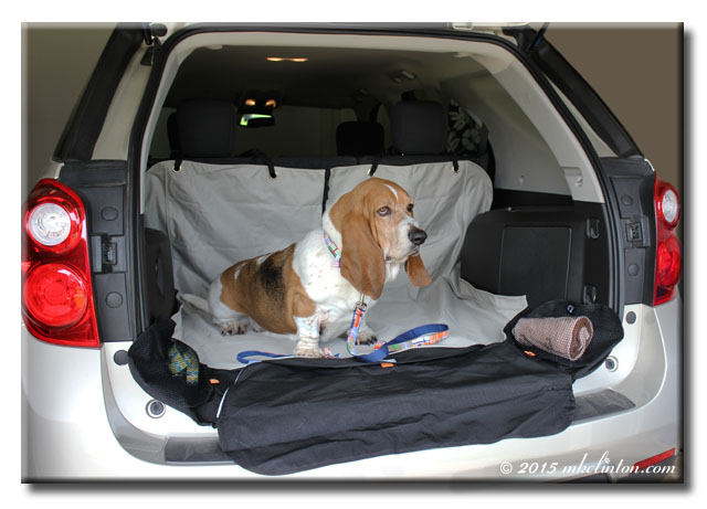 Basset Hound demonstrating Kurgo Cargo Cape
