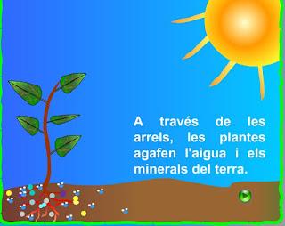 http://www.xtec.cat/~epuig124/naturals/fotosintesis.swf