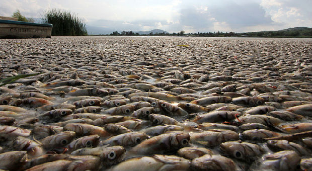 Fukushima Radiation: Hundreds Of Millions Of Salmon Completely Die Off On U.S. West Coast