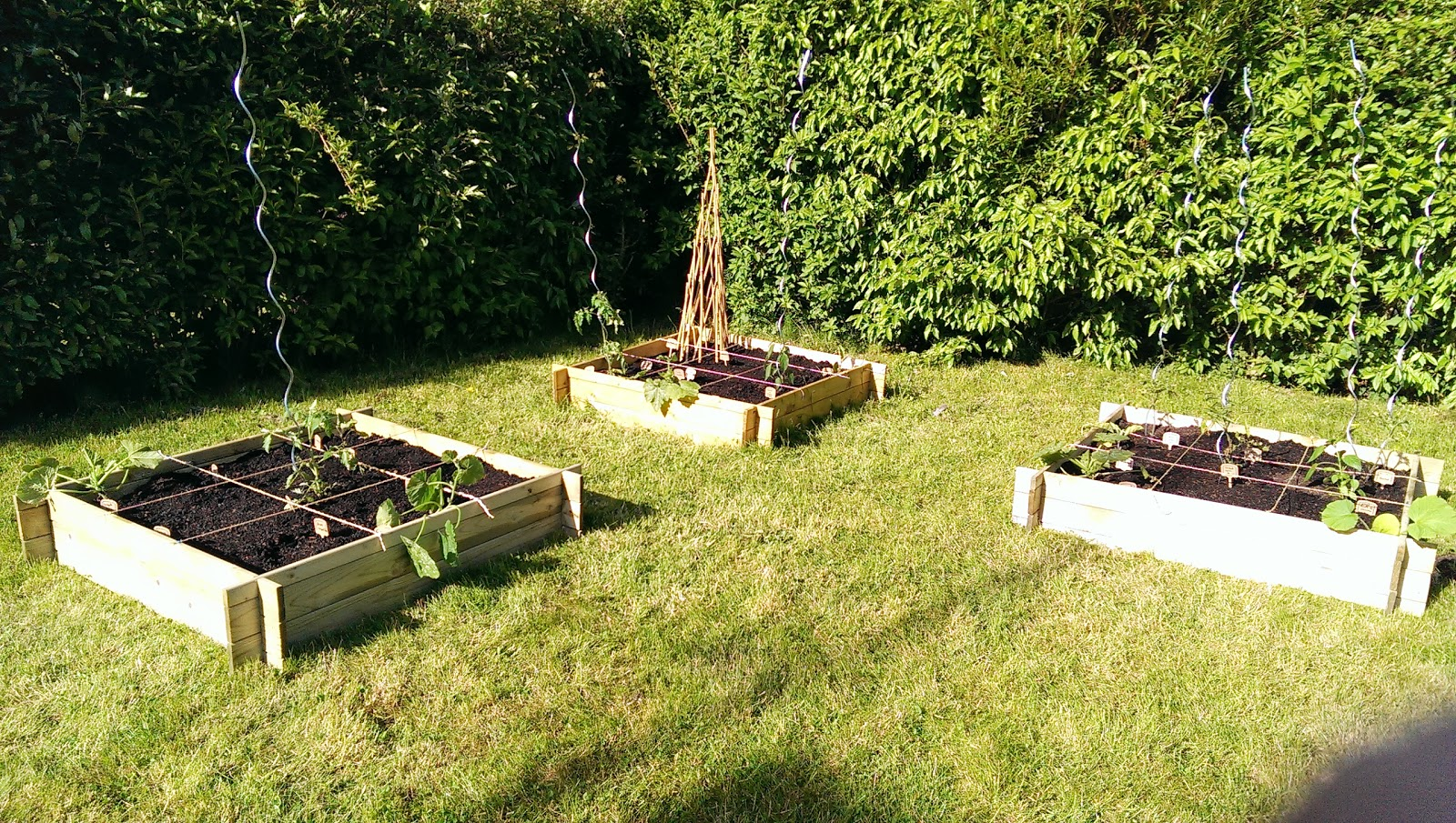 mon potager en carr juillet 2013. Black Bedroom Furniture Sets. Home Design Ideas