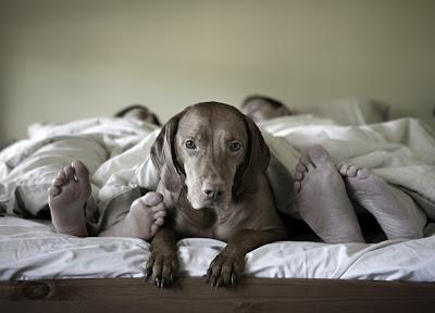 cachorros fofos