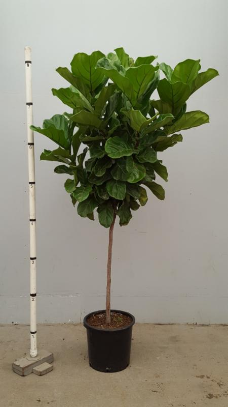 Everything Grows Exciting Interior Plants Available Now