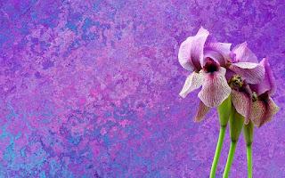 Mitos  bunga iris