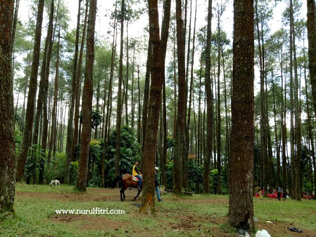 https://nurulfitridiary.blogspot.com/2018/03/wana-wisata-batu-kuda.html