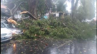 3 mobil tertimpa pohon dan 6 penumpangnya di dalamnya terluka hingga harus di larikan ke Rumah Sakit terdekat