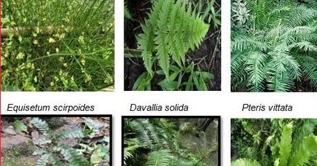 Bahasa Latin Tumbuhan Dan Hewan Beserta Gambarnya Nama Latin Tumbuhan Lengkap Daftar Nama Hewan Tumbuhan