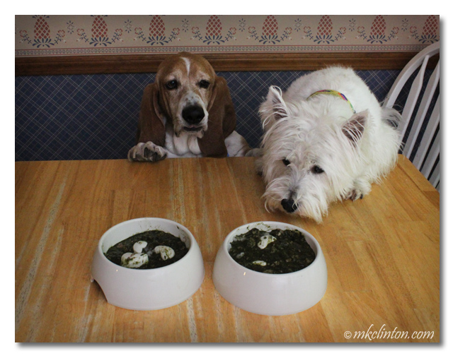 Bentley Basset and Pierre Westie looking at Dr. Harvey's Paradigm Green Superfood Pre-Mix