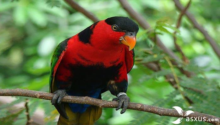7 Makanan Burung Nuri Supaya Pintar dan Cepat Bicara