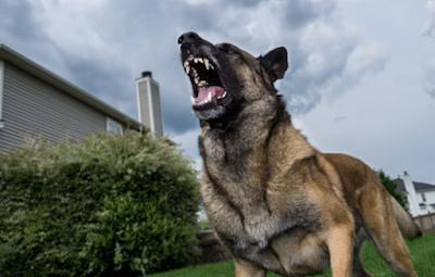 Τι πρέπει να κάνετε εάν σας επιτεθεί σκύλος- Προσοχή μην τον χτυπήσετε!
