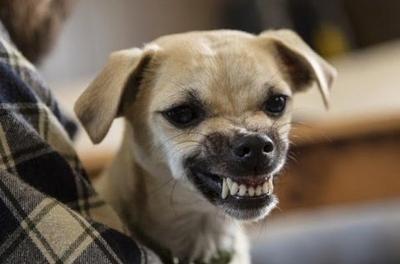 Cachorros que não gostam de tirar fotos