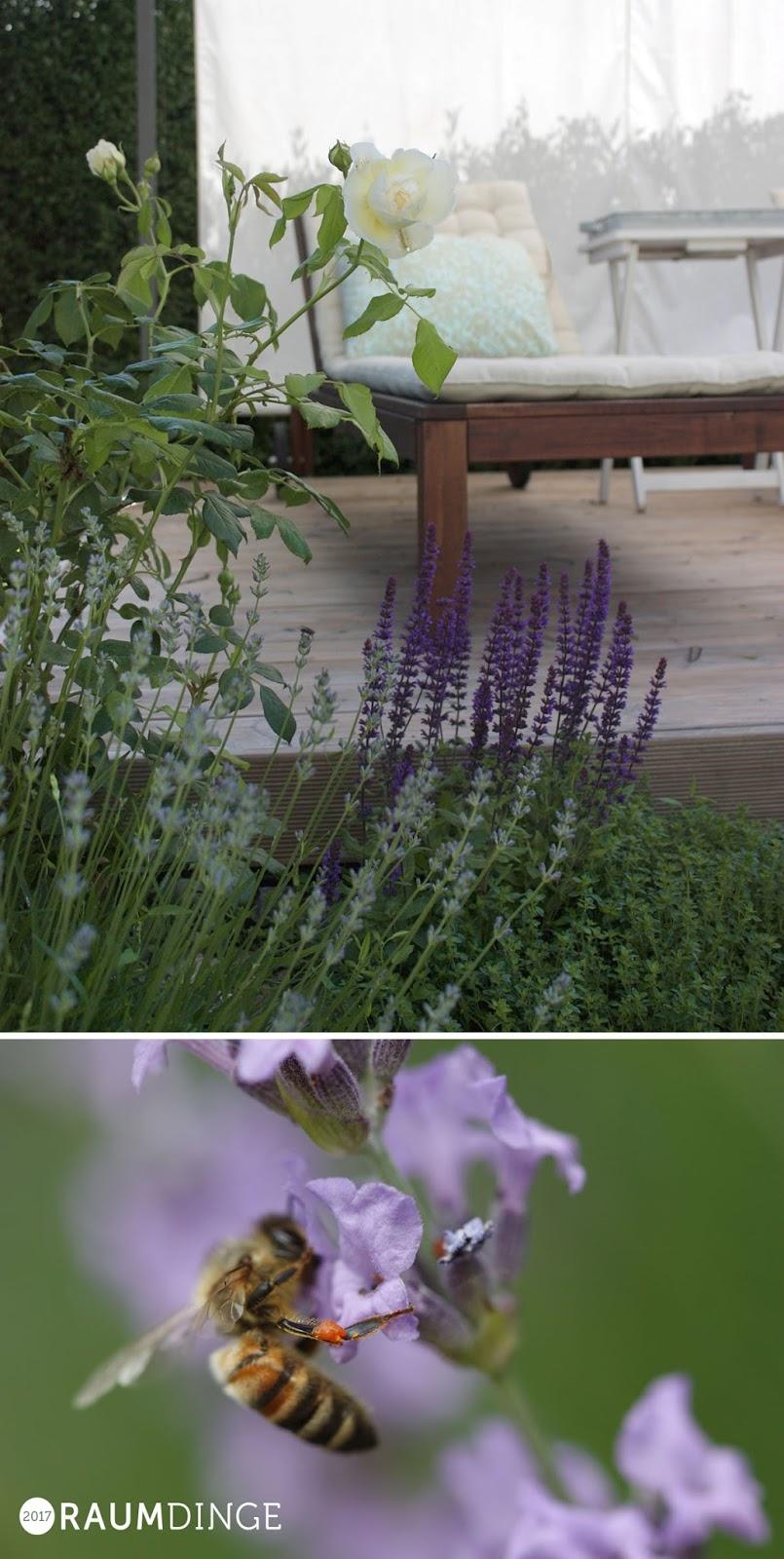 Biene mit Blütenpollen an Lavendelblüte
