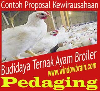 Proposal Kewirausahaan Budidaya/ Ternak Ayam Broiler Pedaging Terbaru yang baik dan benar