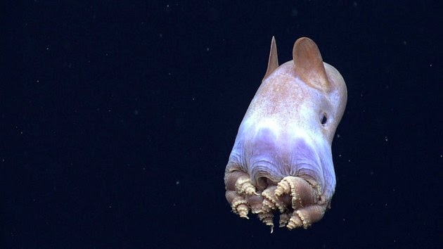 weird-sea-creatures-4