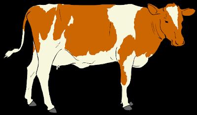 صوت البقرة