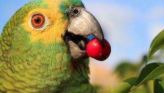 Resultado de imagem para papagaio bancário